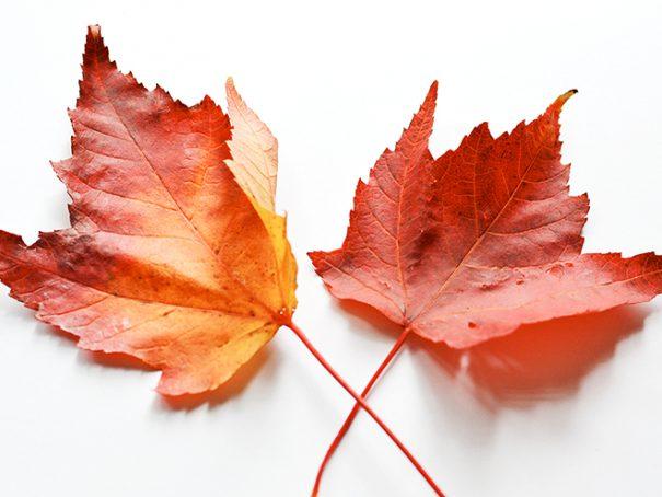 Afbeelding herfstblaadjes
