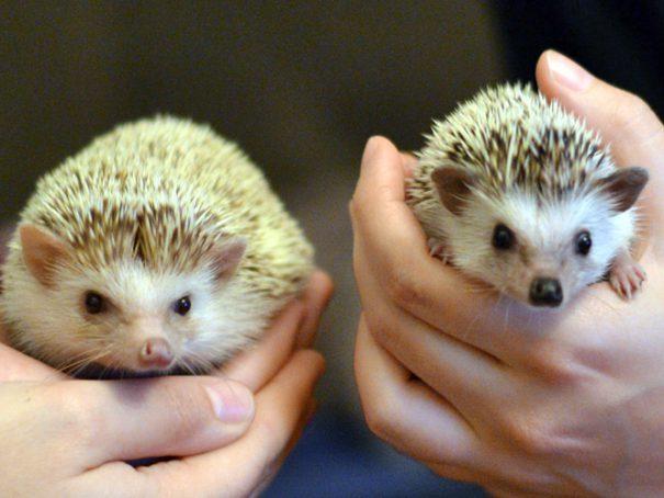 Afbeelding Hazel en Daisy