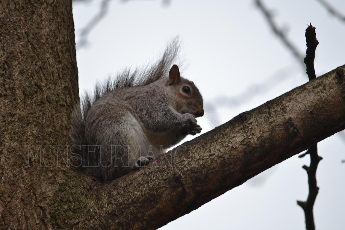 Afbeelding eekhoorn in Londen