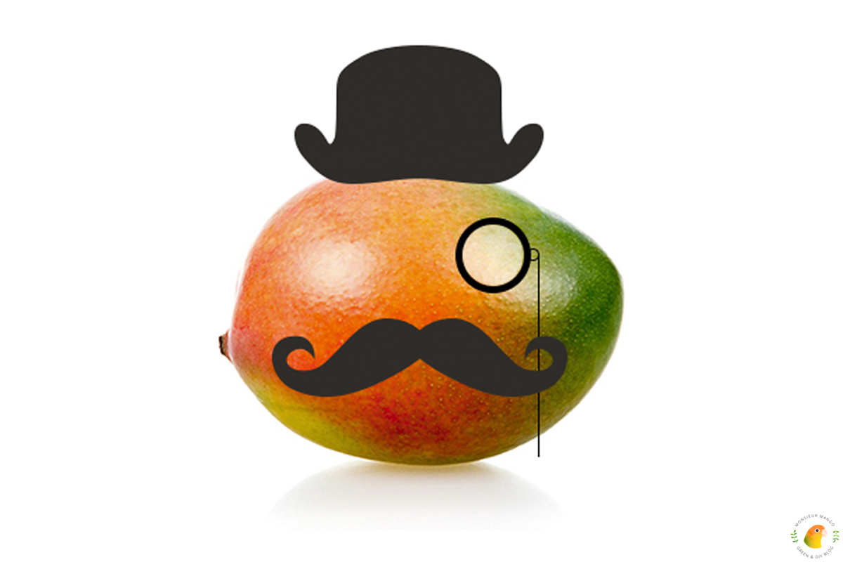 Afbeelding Wie is Monsieur Mango?