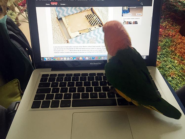 Afbeelding bloggen met Mango