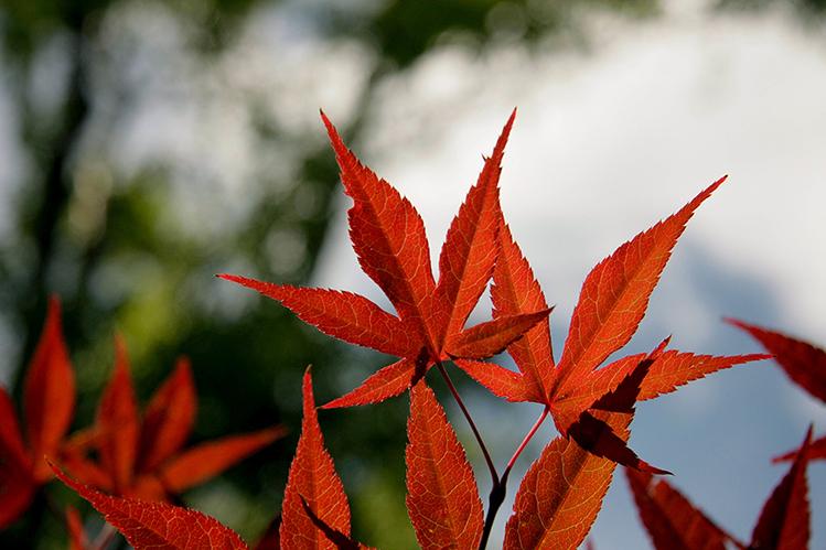 Afbeelding herfst bladeren