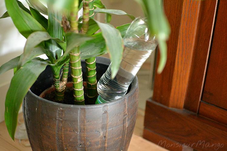 Afbeelding plantentuitje in bloempot