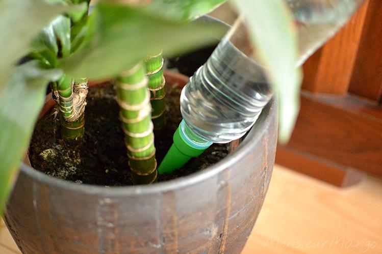 Afbeelding plantentuitje close-up van tuitje in bloempot