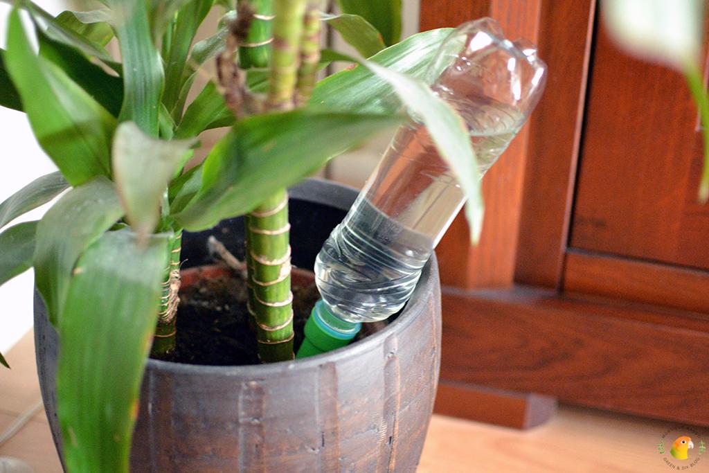 Afbeelding planten watergeven met een plantentuitje