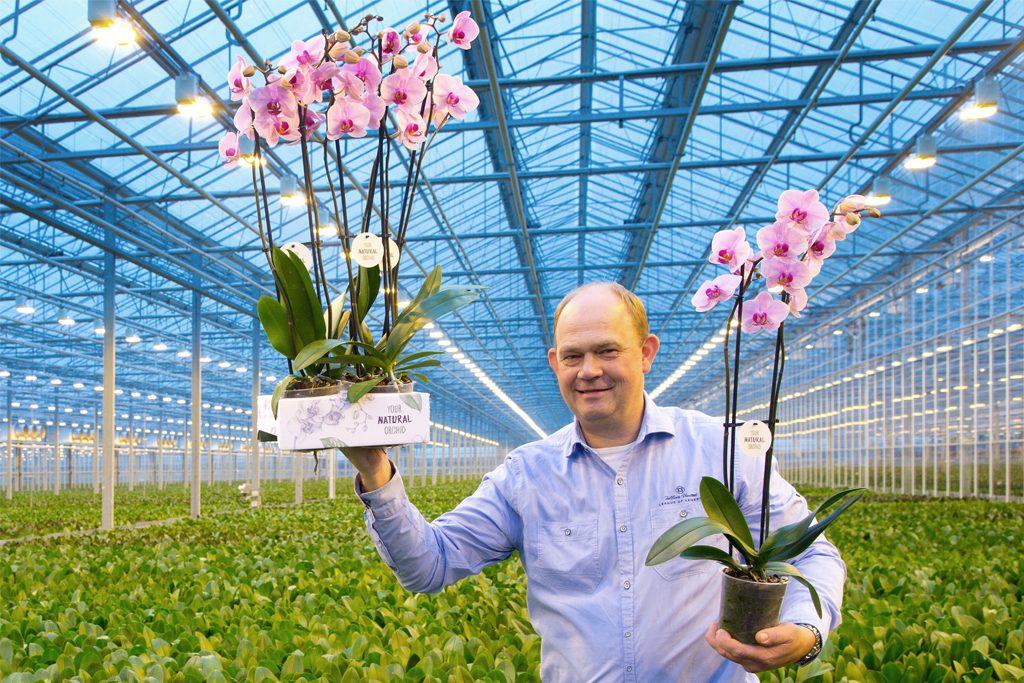 Afbeelding gekweekte orchidee van Stolk Flora