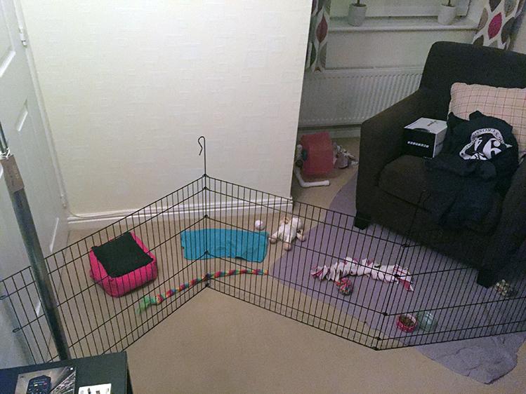 Afbeelding een egel als huisdier #2: speelruimte in de kamer voor egels