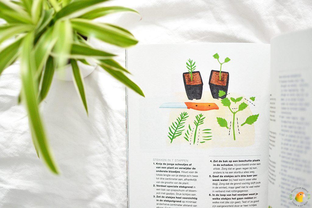 Afbeelding Flow Wonen moestuin en planten tips