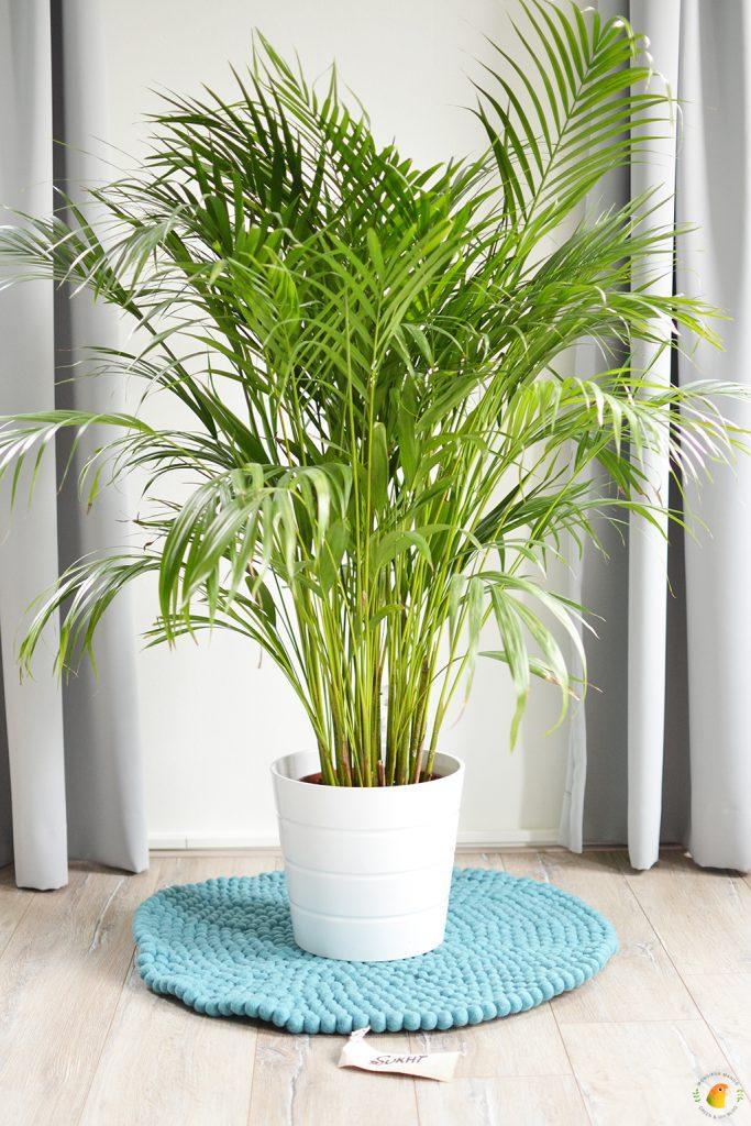 Afbeelding bolletjeskleed van Sukhi: Menkhu onder plant