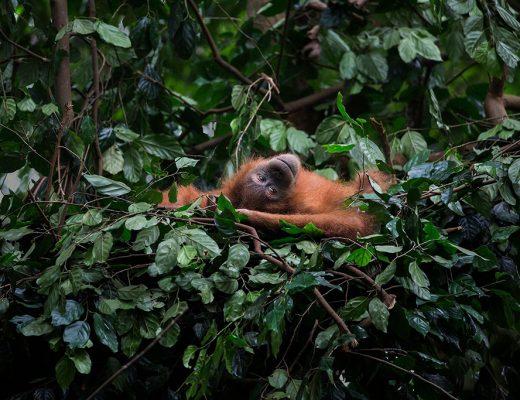 LUSH | Koop Orangutan zeep en red een orang-oetan