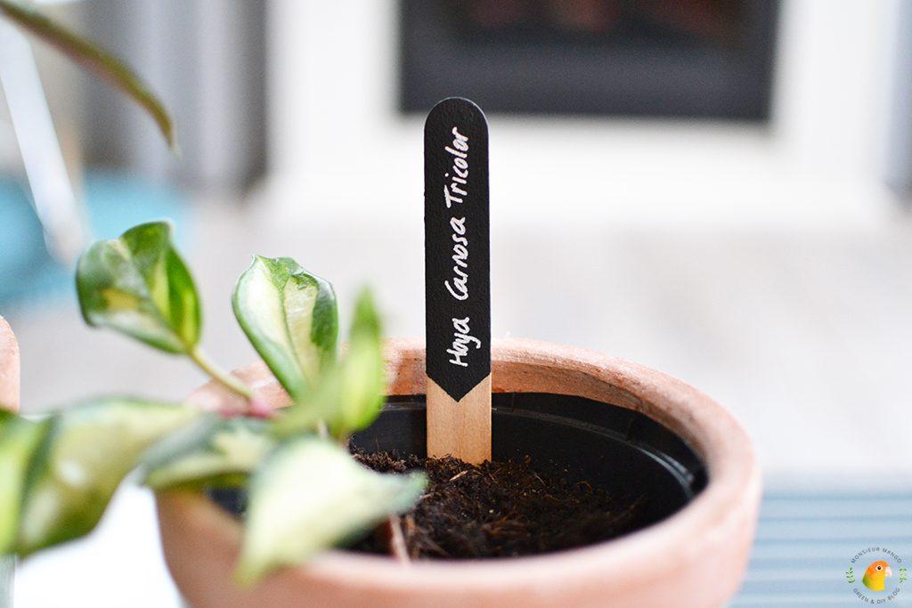 DIY Plantenbordjes | Monsieur Mango